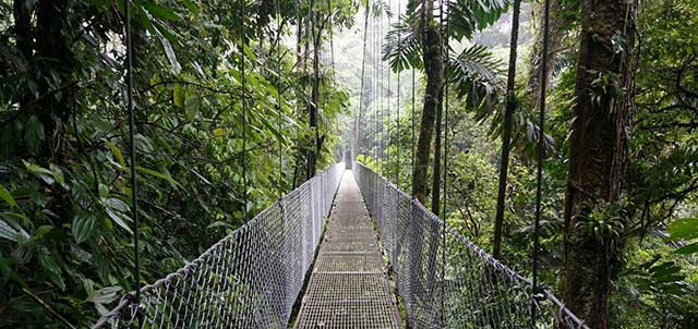 Swing bridge in the trees of Costa Rica