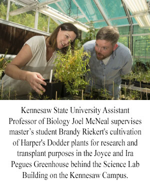 Photo of Kennesaw State University Assistant Professor of Biology Joel McNeal supervises master's student Brandy Riekert's cultivation of Harper's Dodder plants for research and transplant purposes in the Joyce and Ira Pegues Greenhouse behind the Science Lab Building on the Kennesaw Campus.